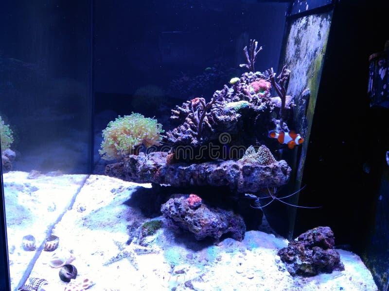 Aquarium met vissen royalty-vrije stock afbeelding