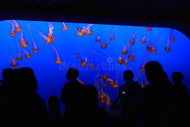 aquarium monterey images stock