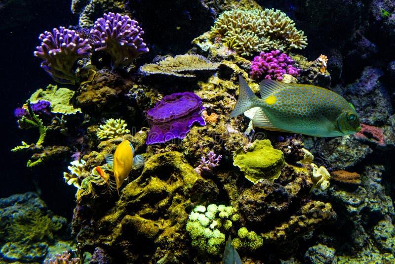 Aquarium océanique de sealife avec la mosaïque de beaucoup d'espèces de coloré photos libres de droits