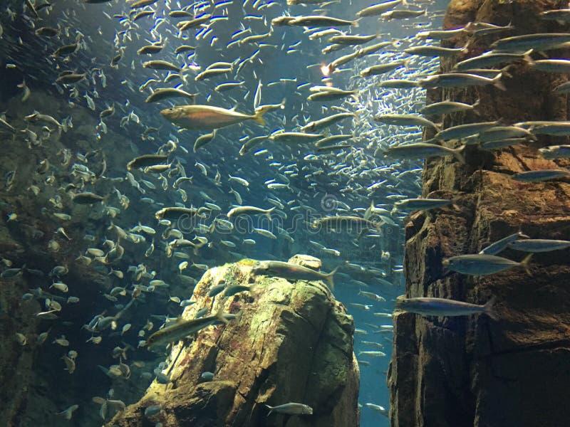 Aquarium Osaka royalty-vrije stock afbeeldingen