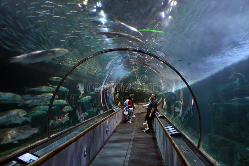 Aquarium at Pier39, San Francisco, California. Aquarium of the Bay is a public aquarium located at Embarcadero and Beach Street, at the edge of Pier 39 in San royalty free stock photos