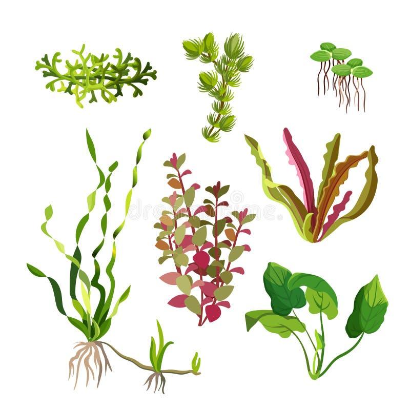 Aquarium plants set. Cartoon underwater algae. Seaweed natural elements. Decoration grass for fish tanks and terrariums. Ocean flora. Aquatic life. Branches royalty free illustration