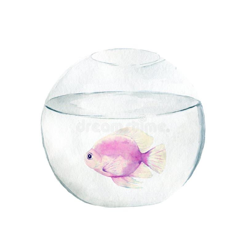 Aquarium, a realistic aquarium with fish and algae. Watercolor illustration of aquarium with fish isolated on white stock illustration