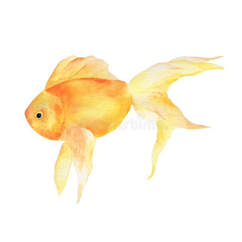 Aquarium, a realistic aquarium with fish and algae. Watercolor illustration of aquarium with fish isolated on white royalty free illustration