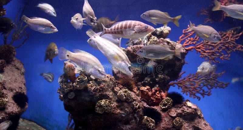 Aquarium scene stock image