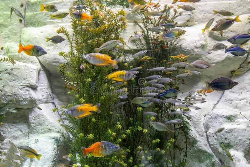 Beautiful Aquarium scene royalty free stock image