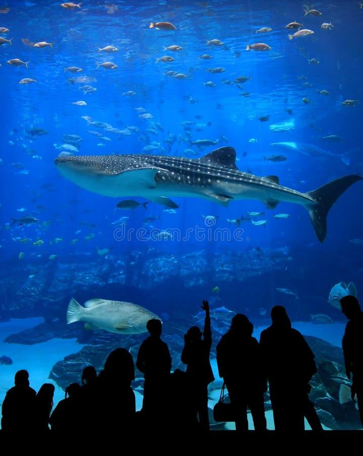 Aquarium silhouettes stock image