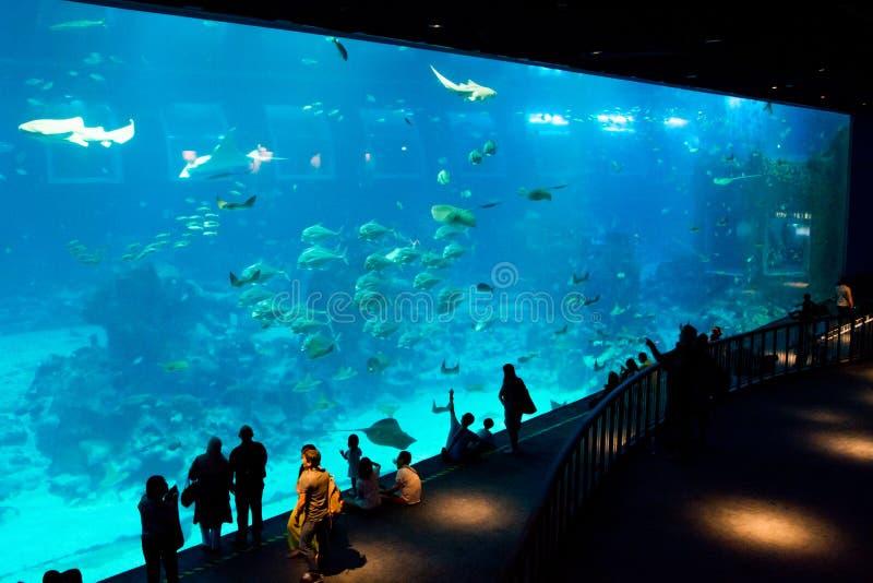 Aquarium, Singapore royalty-vrije stock afbeelding