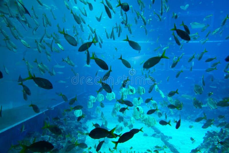 Aquarium, Singapore royalty-vrije stock foto