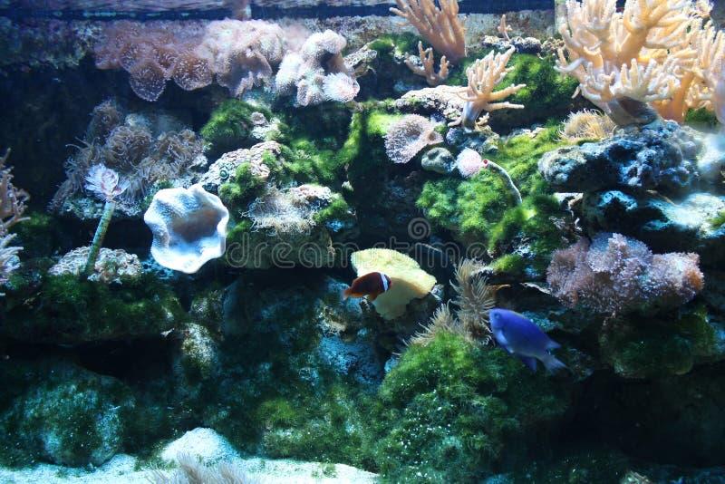 Aquarium sous-marin du monde images libres de droits