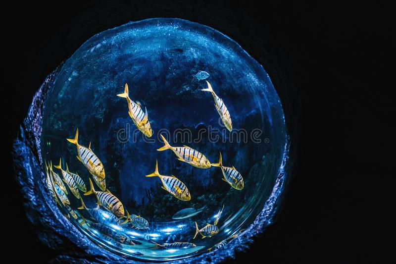 Aquarium of spherical shape with exotic fishes royalty free stock images