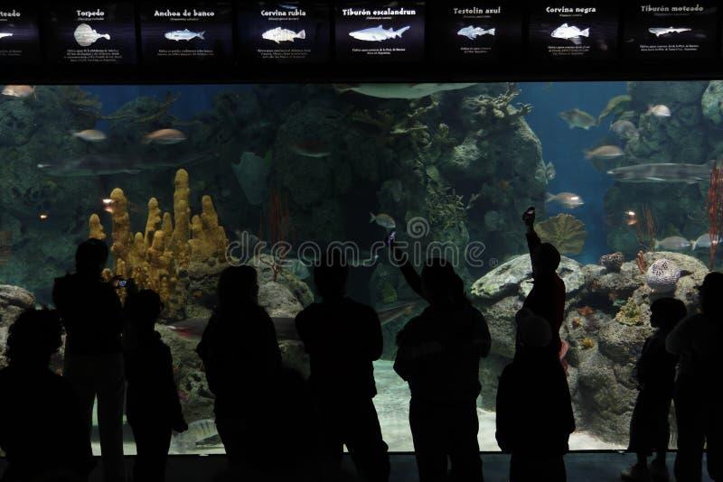 Aquarium In Temaiken Stock Photos