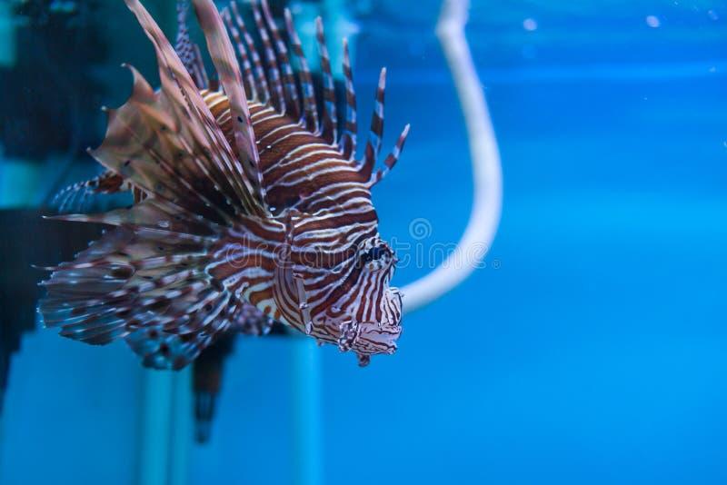 Aquarium thailand stock photo