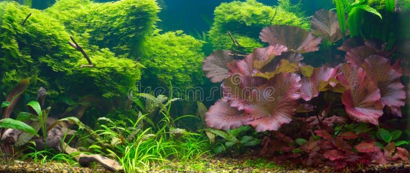 aquarium tropical images libres de droits