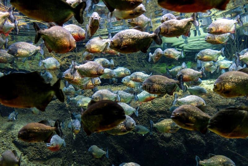 Aquarium tropical avec la mosaïque de beaucoup d'espèces des poissons colorés f image stock