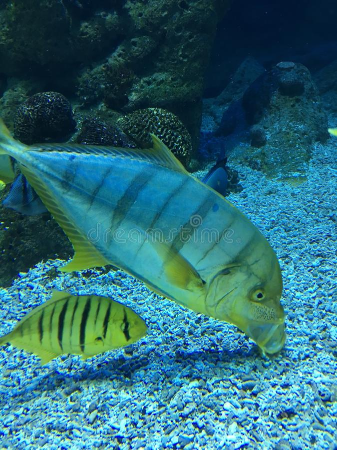 Aquarium tropical fishes close up stock image