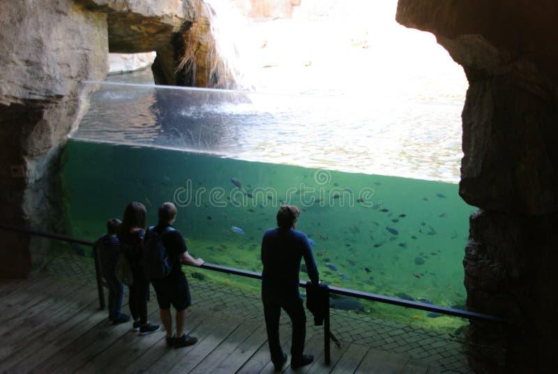 aquarium van hoogten royalty-vrije stock afbeelding