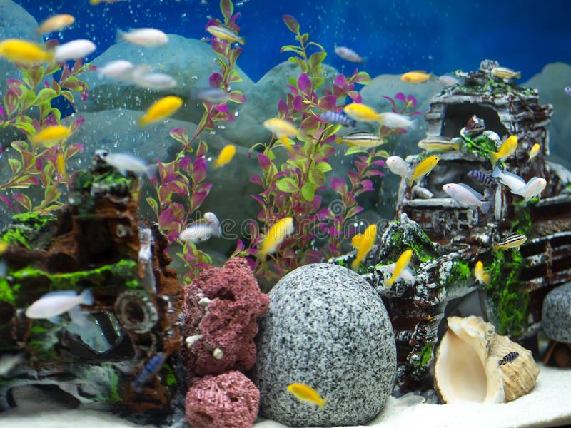 Aquarium with various fishes and blue background. Aquarium with various color fishes and blue background royalty free stock photo
