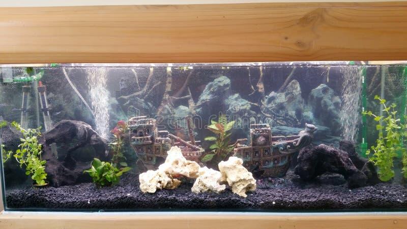 Aquarium, vissen royalty-vrije stock foto's