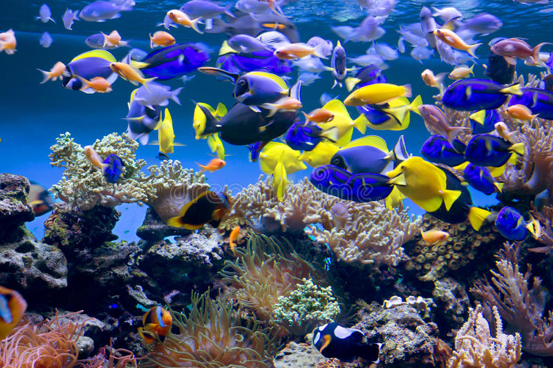 Aquarium. The aquarium will delight You with its unforgettable beauty of the underwater world