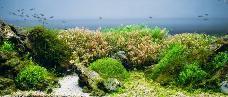 Aquariumalgen, Elemente der Flora im fishbowl stockfoto
