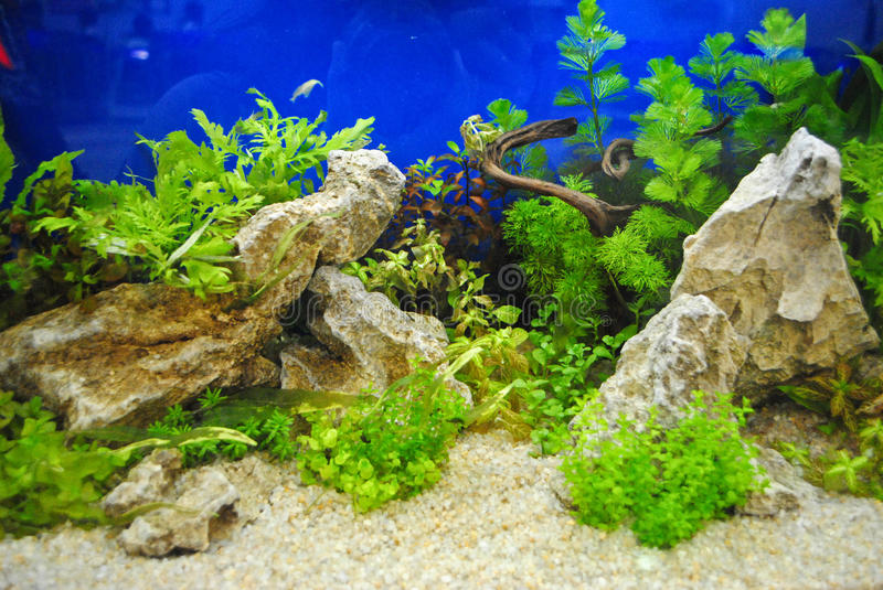 Aquariumdekoration lizenzfreie stockfotos