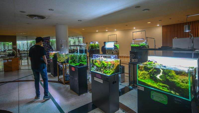 Aquariumdekorationen für Verkauf in Bangkok, Thailand stockbild