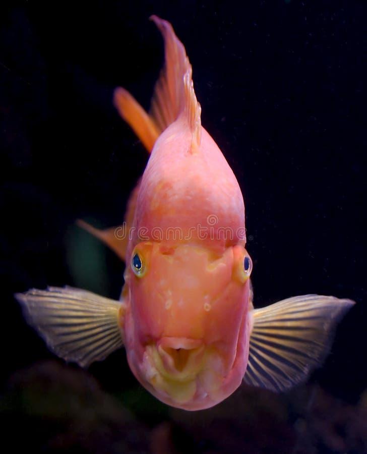 Aquariumfische stockfoto