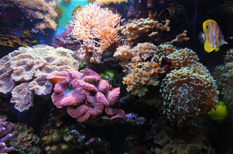 Aquariumleben lizenzfreie stockfotografie