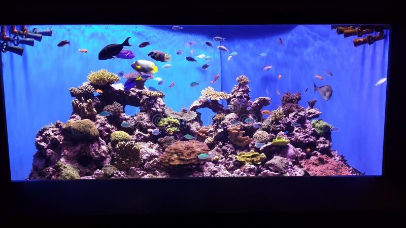 Aquariumscène stock foto's
