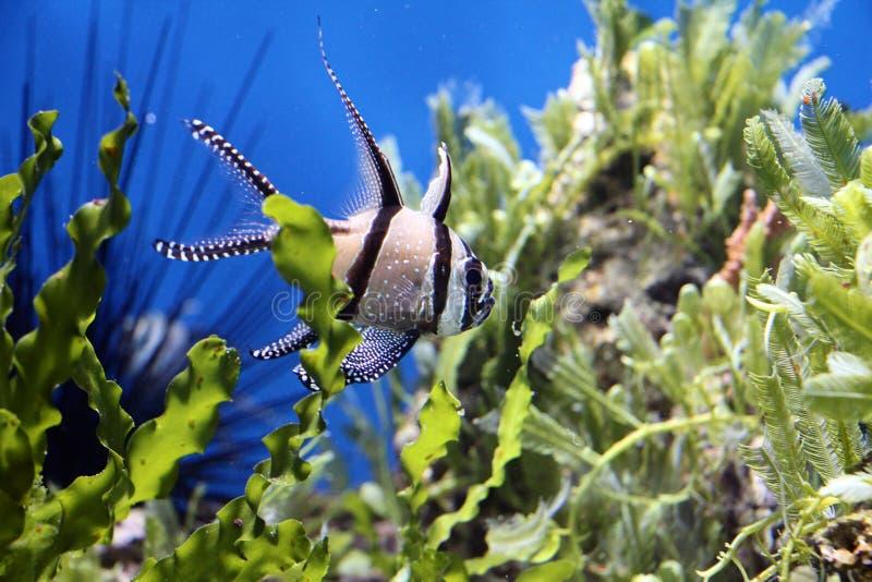 Aquariumvissen stock afbeelding