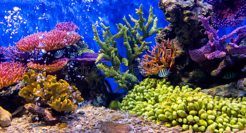 Aquariumvissen met koraal en waterdieren royalty-vrije stock fotografie