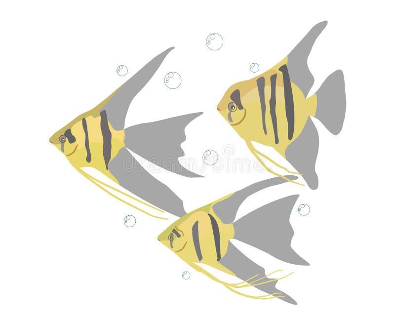 Aquariumvissen op een witte achtergrond stock illustratie