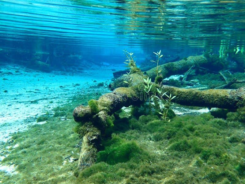 Aquascape zdjęcia stock