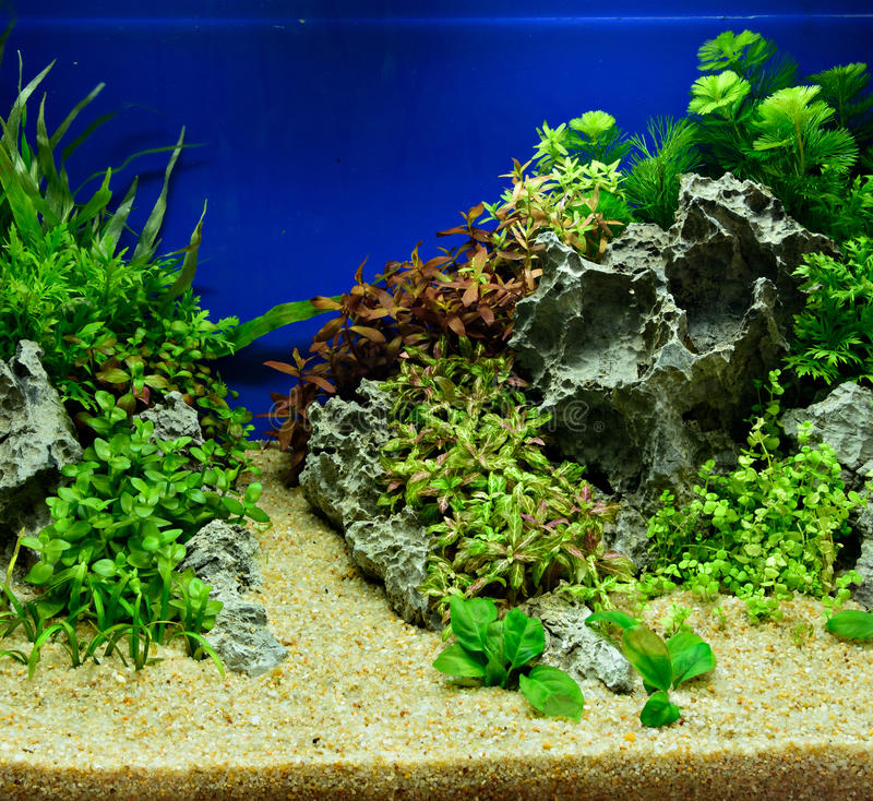 Download Aquascaping Of The Planted Aquarium Stock Image   Image Of Hobby,  Tropical: 89390783