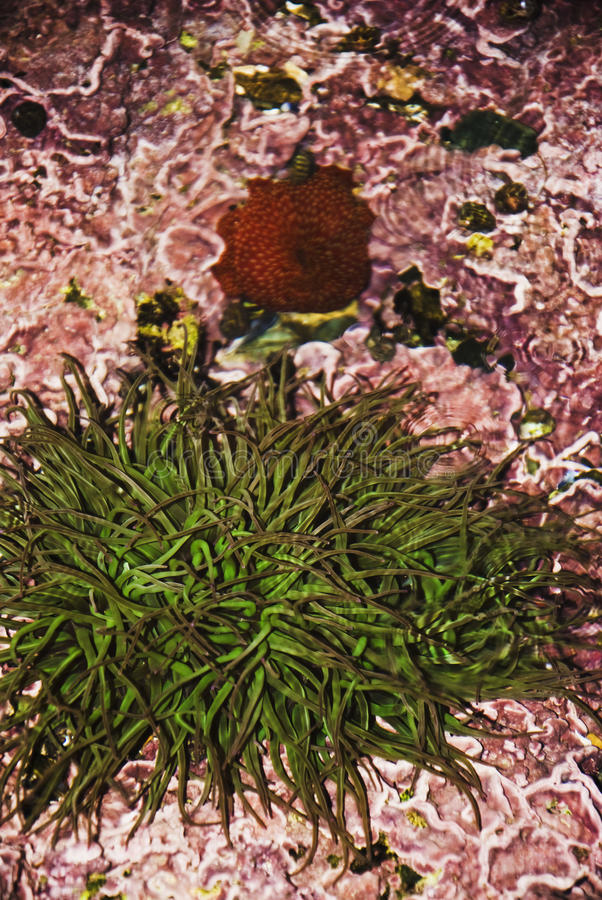 Download Aquatic stock image. Image of seaweed, rock, paradise - 29072793