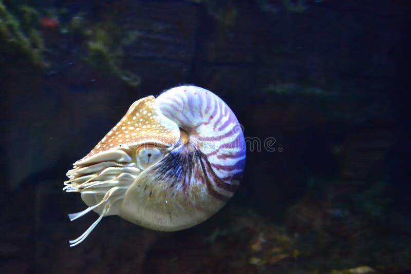 Aquatic animal in aquarium royalty free stock image