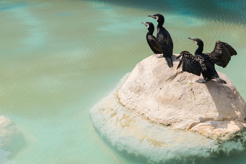 Aquatic birds on a rock. Exotic, aquatic birds standing on a rock. Oceanographic of the City of Arts and Sciences in Valencia, Spain stock images