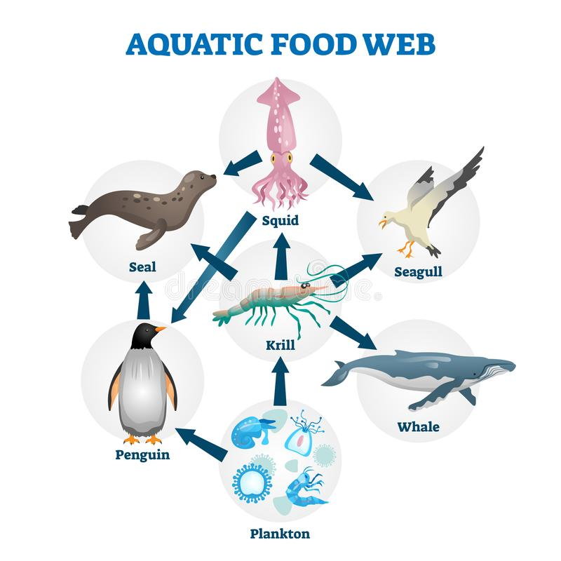 Free Aquatic Food Web Vector Illustration. Labeled Educational Water Life Scheme Royalty Free Stock Photos - 164875278