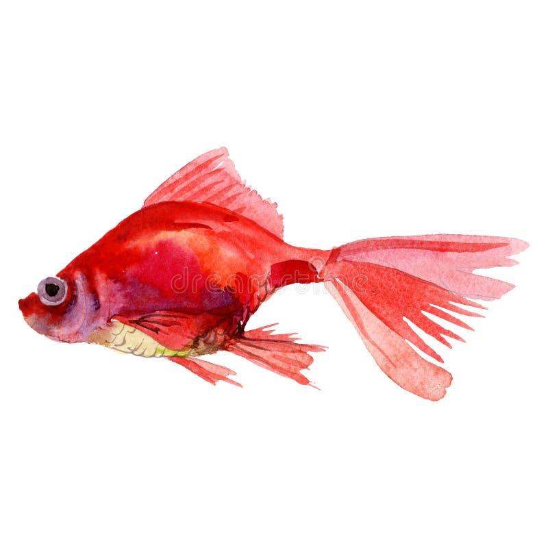 Aquatic underwater colorful tropical fish set. Watercolor background set. Isolated goldfish illustration element. vector illustration