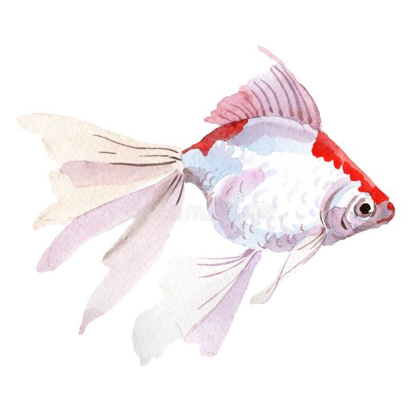 Aquatic underwater colorful tropical fish set. Watercolor background set. Isolated goldfish illustration element. royalty free illustration