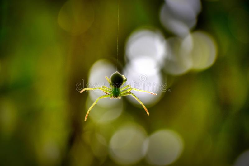 aquela é aranha verde foto de stock