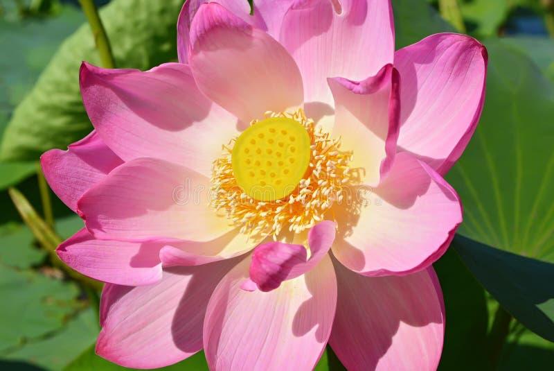 Aqui na flor eu fácil caí imagem de stock