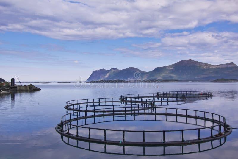 Aquiculture en Norvège image libre de droits