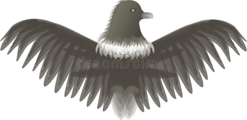 Aquila immagine stock libera da diritti