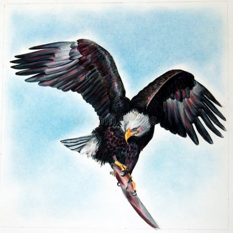 Aquila americana illustrazione vettoriale