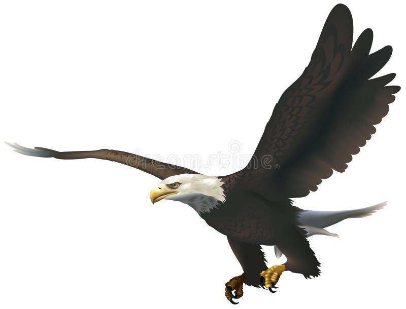 Aquila calva royalty illustrazione gratis