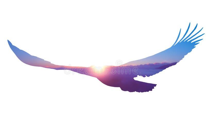 Aquila calva su fondo bianco fotografia stock libera da diritti