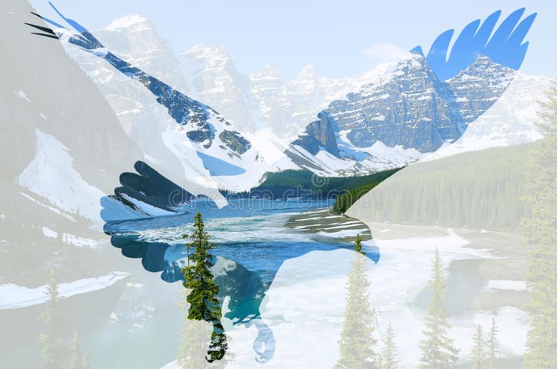 Aquila calva sul fondo del lago moraine immagini stock libere da diritti