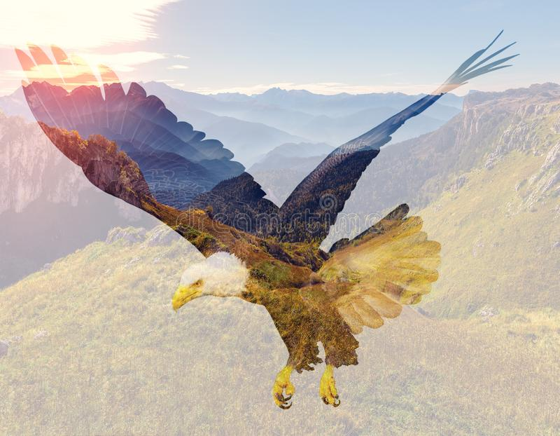 Aquila calva sul fondo del paesaggio della montagna fotografia stock